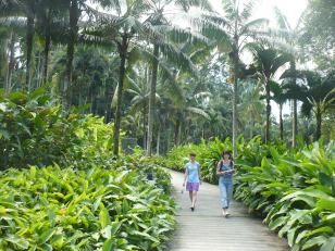 In the Singapore botanic garden